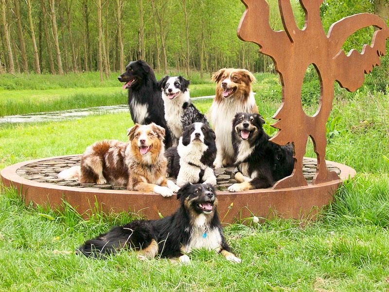 Australian Shepherd Info Züchter - Hunderasse Hunde123.de