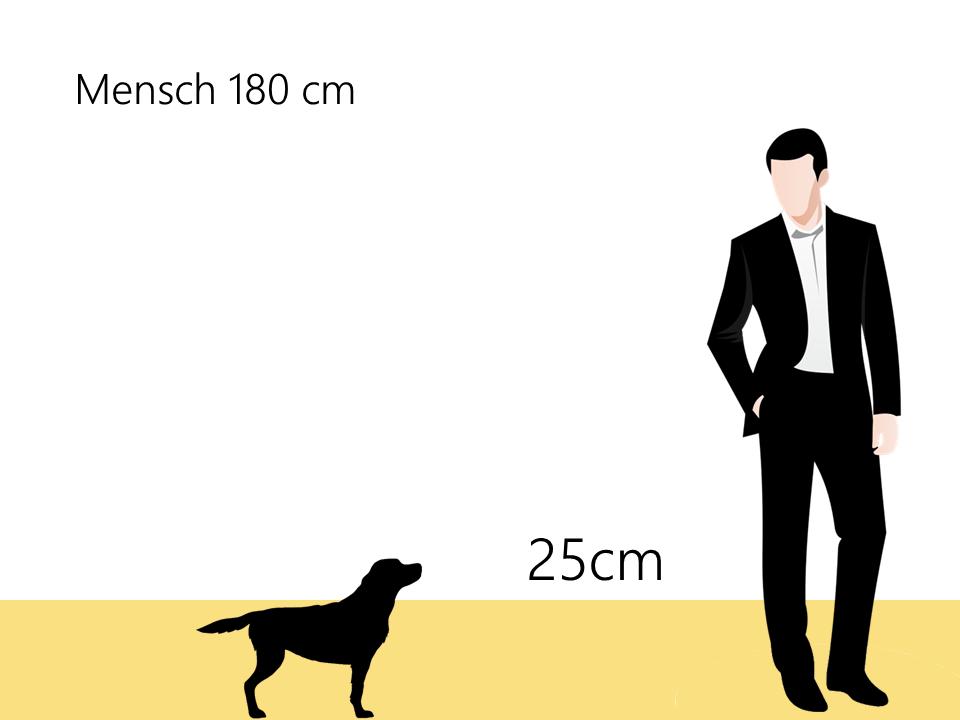 Bolonka Zwetna Größenvergleich Größe - Hunde123.de