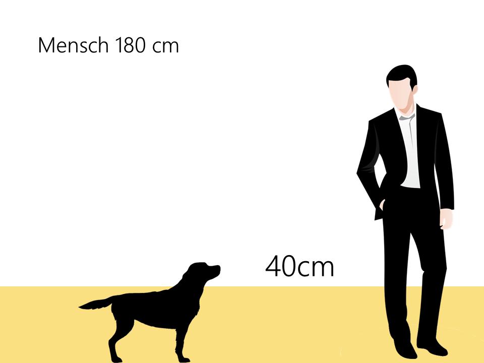Elo Hund Größe Größenvergleich - Hunde123.de