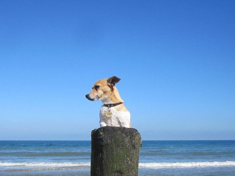 jack russell terrier wesen züchter - Hunde123.de