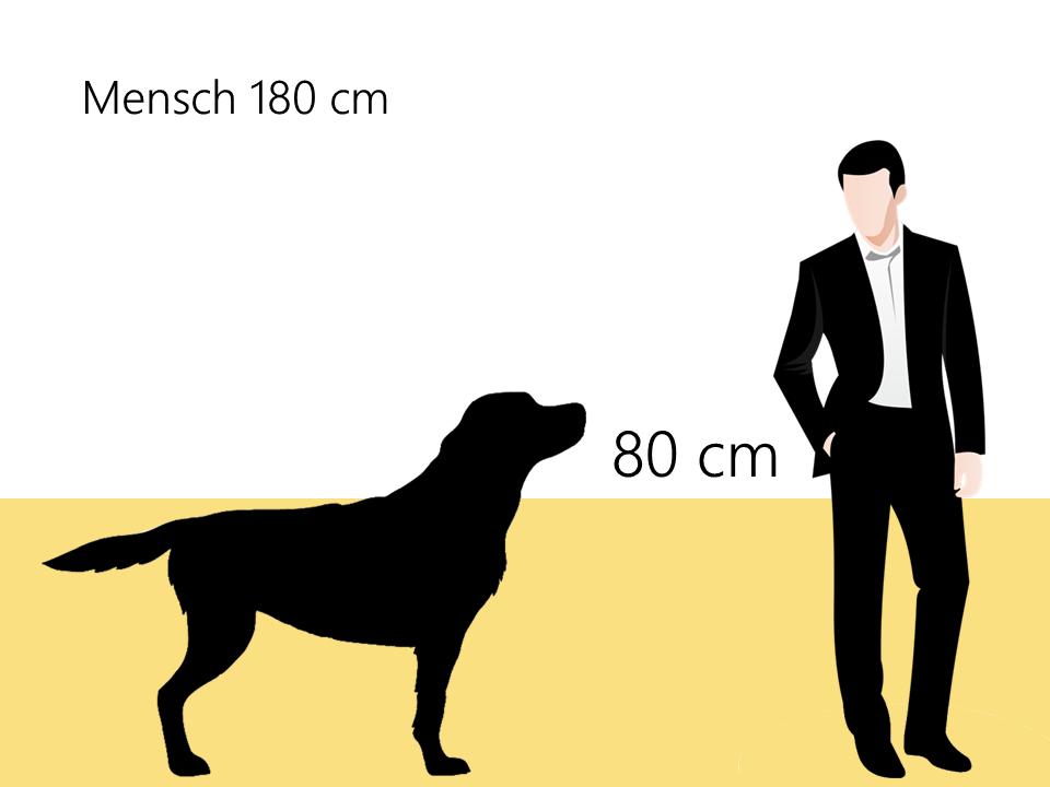 Größe Bernhardiner Größenvergleich Hunderassen - Hunde123.de