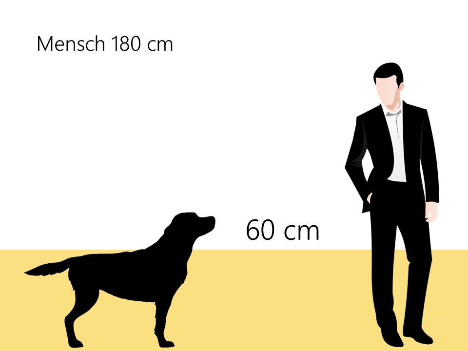 Bobtail Größenvergleich wie groß ist ein bonbtail - Hunde123.de