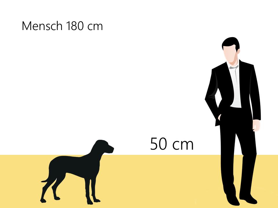 Boston Terrier Größenvergleich Größe - Hunde123.de