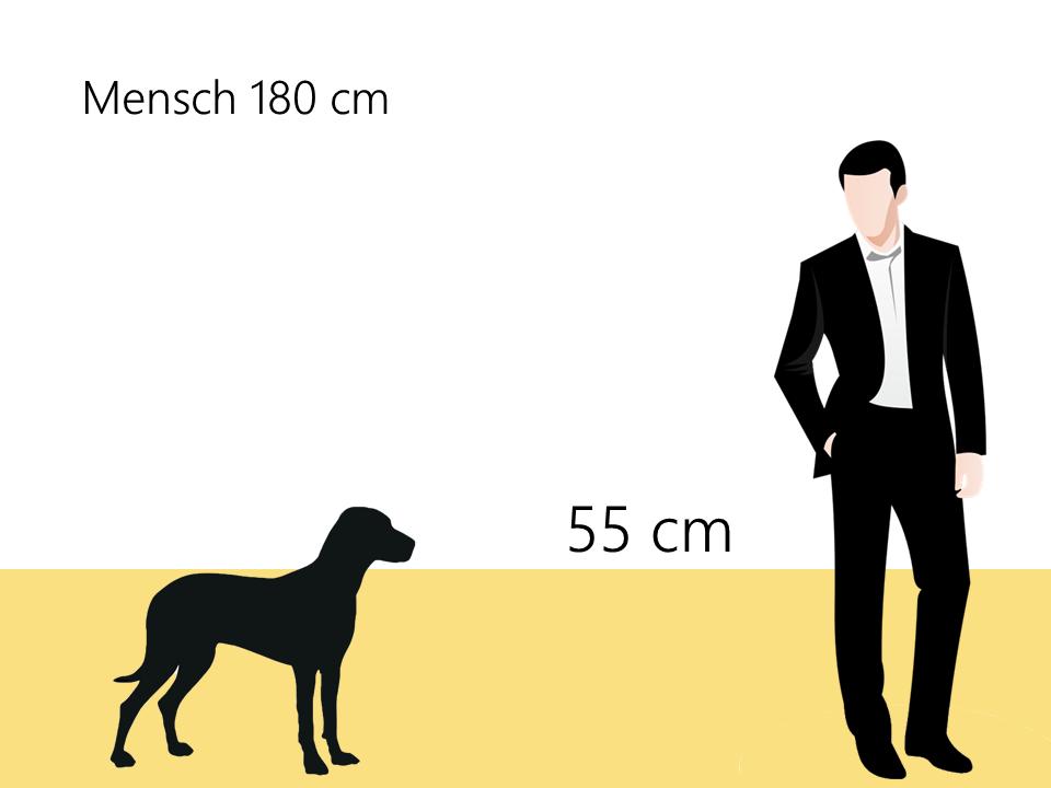 Größe Dalmatiner Größenvergleich - Hunde123.de