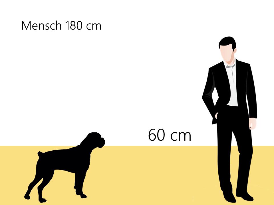 Deutscher Boxer Größe Hundrassen Größenvergleich- Hunde123