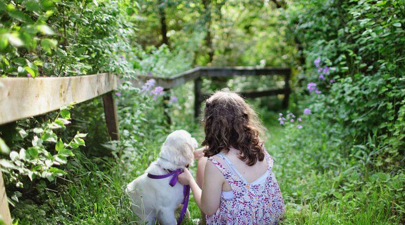 besten Hunderassen für Familien - Hunde123.de
