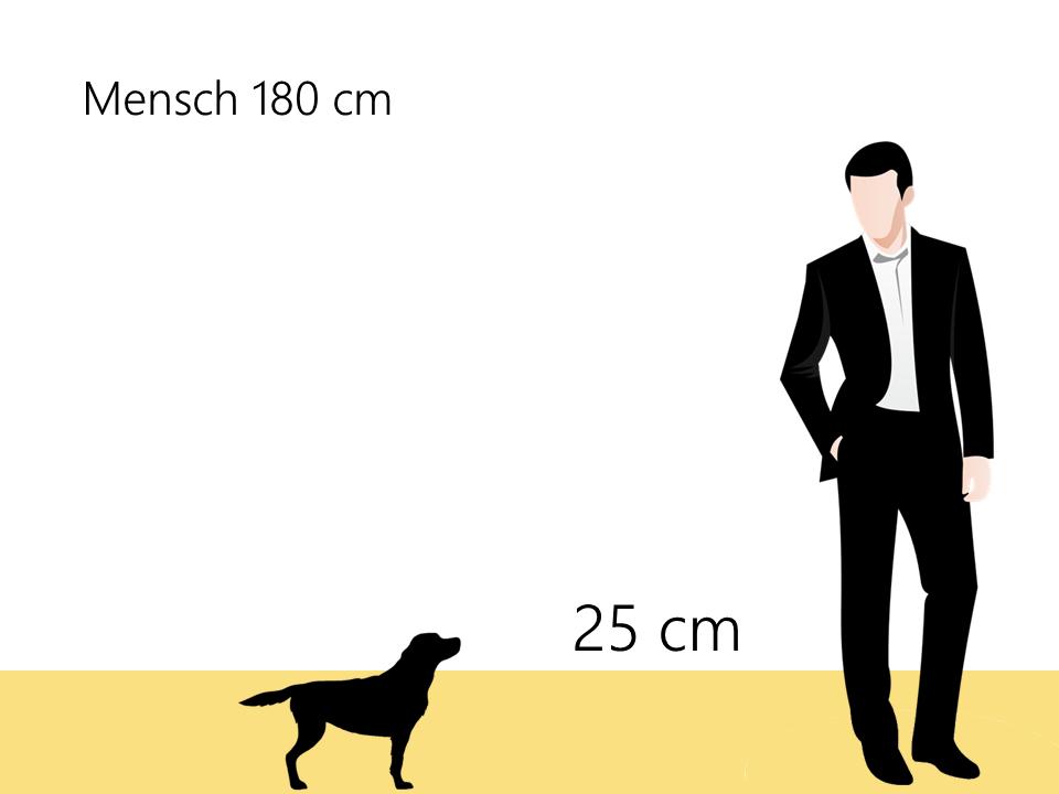 wie groß´ist ein Havaneser Größenvergleich Größe Hunderasse - Hunde123.de