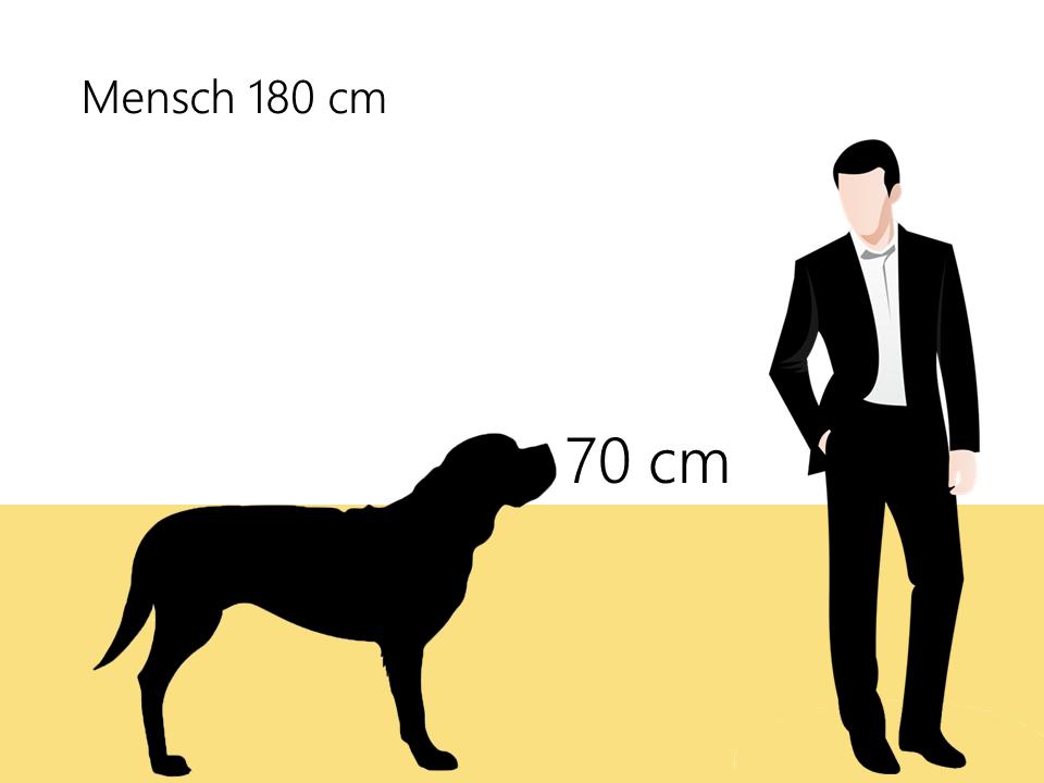 wie groß ist ein Neufundländer Größenvergleich Hunderasse - Hunde123.de