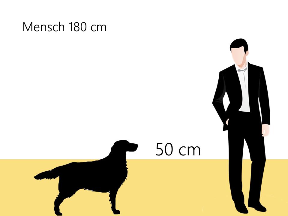 Größe Deutscher Wachtelhund Größenvergleich - Hunde123.de