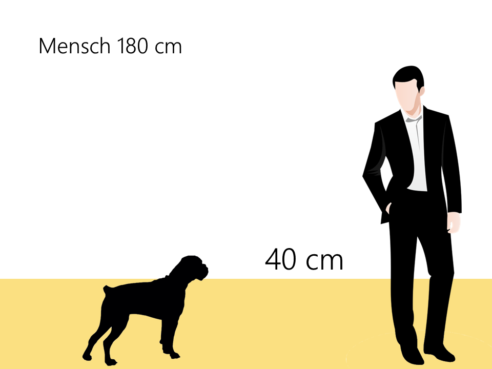 Englische Bulldogge Größe Hundrassen Info Größenvergleich - Hunde123.de