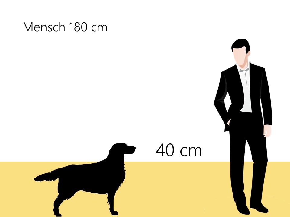 Größe Englischer Cocker Spaniel