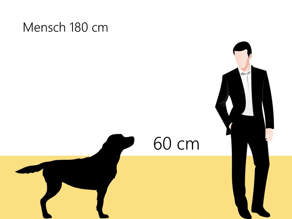 Größe Golden Retriever Größenvergleich - Hunde123.de
