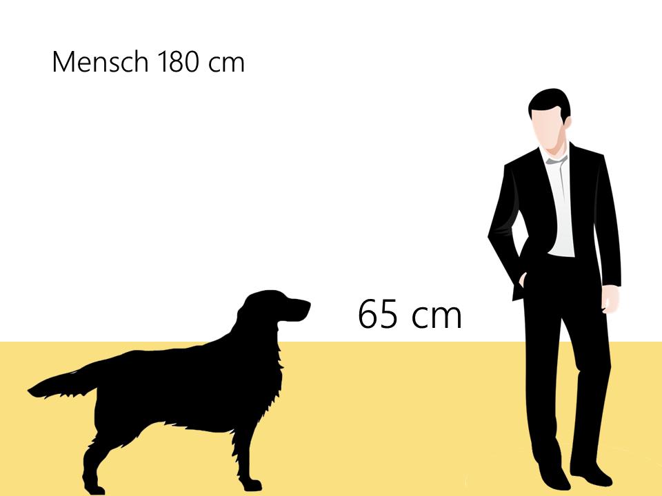 Größe Hovawart Größenvergleich Hunderasse- Hunde123.de