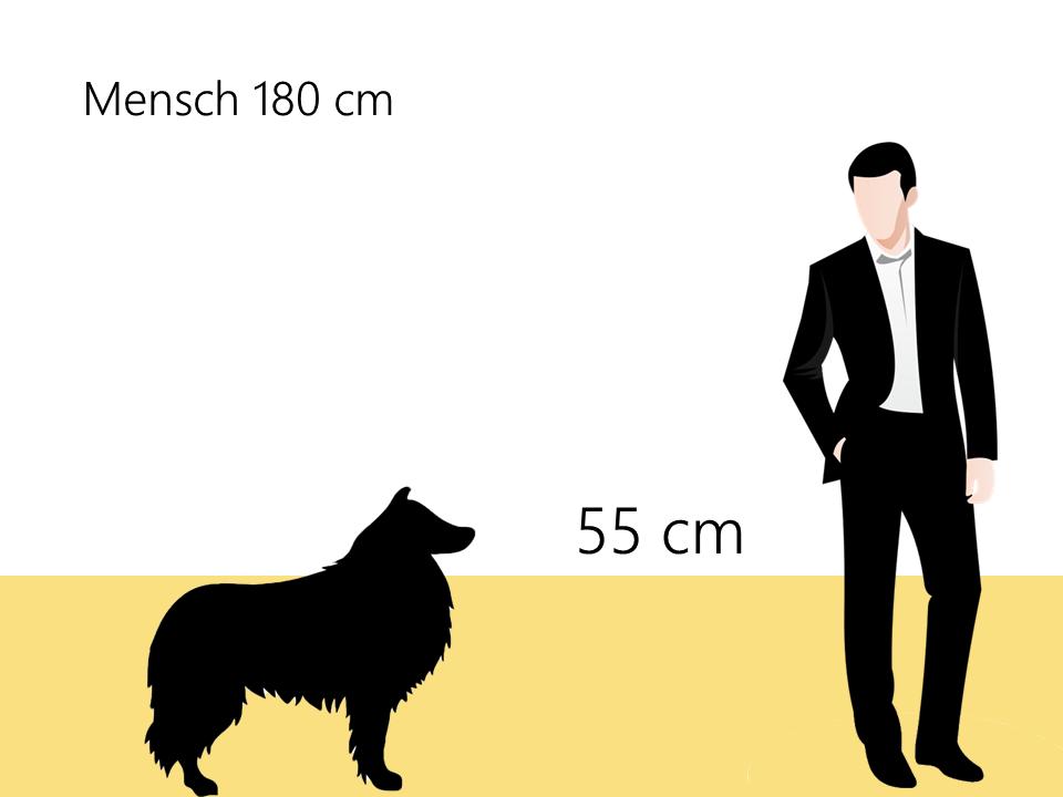 wie groß ist ein Langhaarcollie Größenvergleich - Hunde123.de