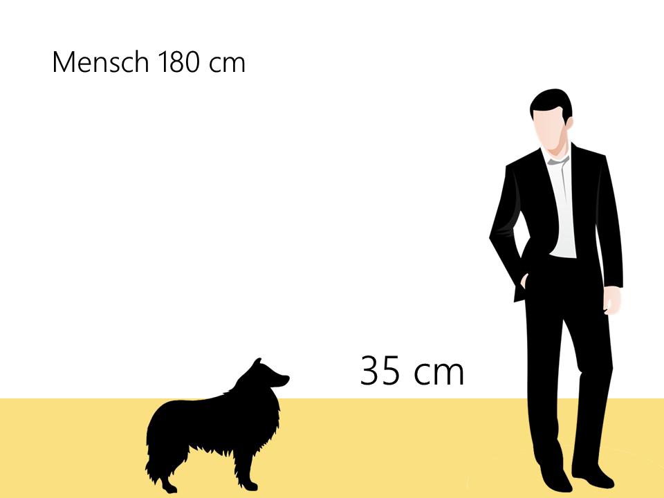 wie groß ist ein Shetland Sheepdog Sheltie Größenvergleich - Hunde123.de