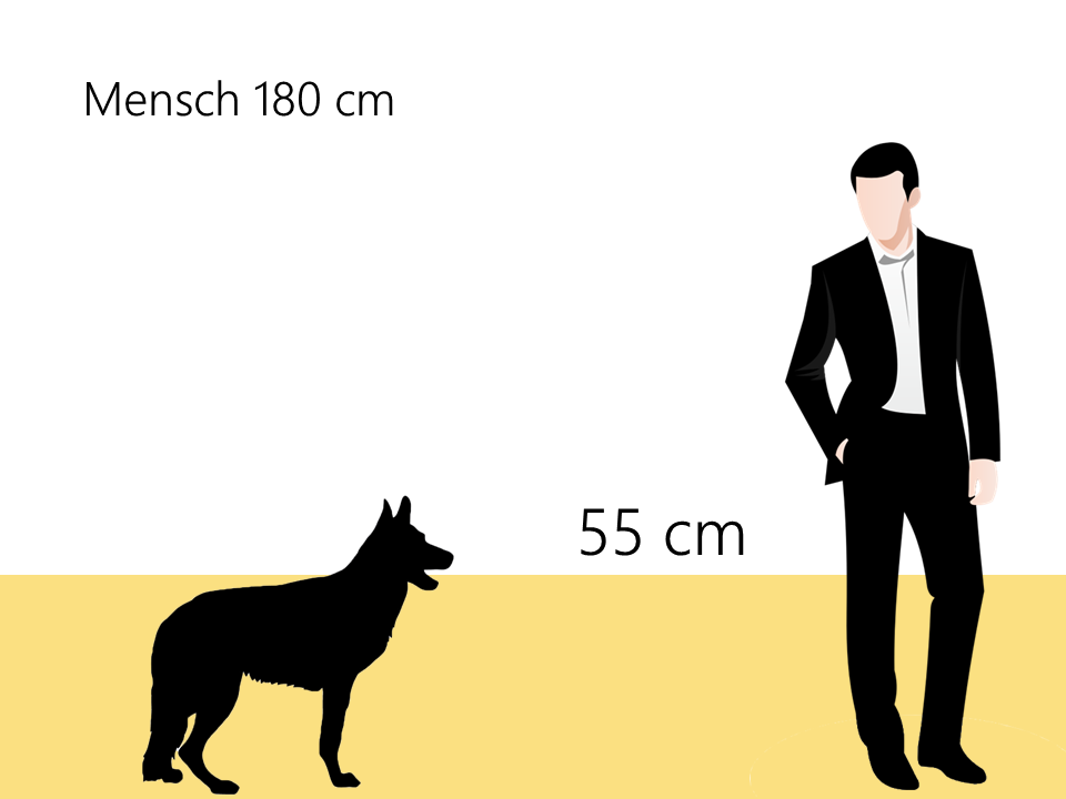 wie groß ist ein Siberian Husky Größe Größenvergleich - Hunde123.de