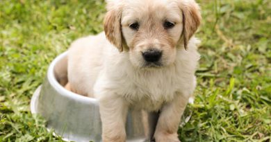 Hundwelpen kaufen Züchter - Hunde123.de
