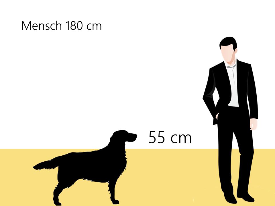 appenzeller sennenhund größe größenvergleich - Hunde123.de Hunderassen