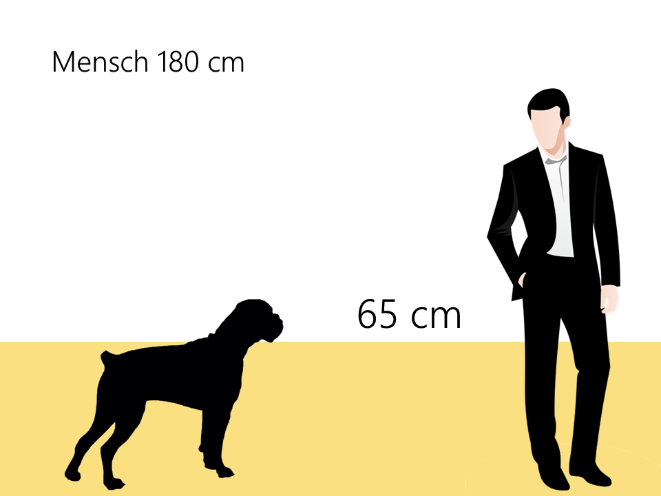 bordeaux dogge größe größenvergleich - Hunde123.de