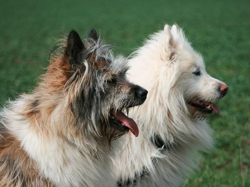 Elo Hunderasse Erziehung Haltung Wesen Gesundheit - Hunde123.de