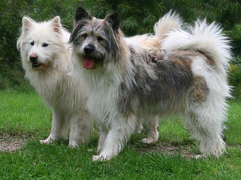 Hundekauf Beratung Elo Gesundheit Lebenserwartung - Hunde123.de